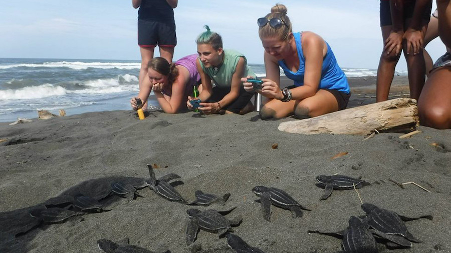 Baby Turtles Release_Costa Rica