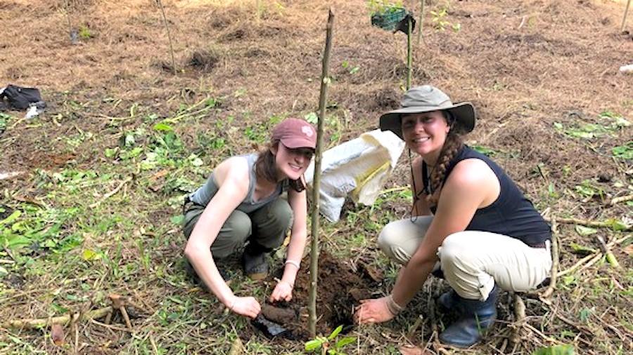 Volunteers plant trees in Costa Rica