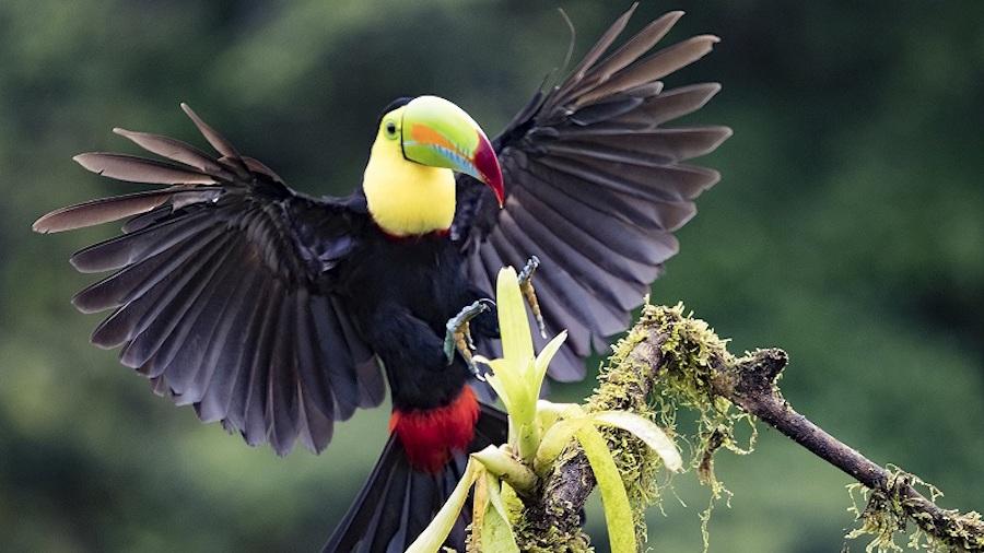 Toucan in Costa Rica_Volunteer in the Rainforest