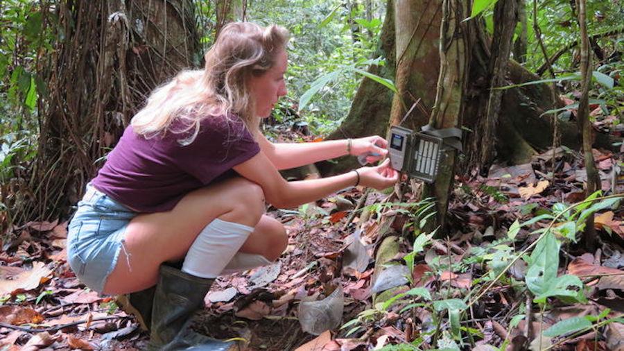 Volunteer in the Rainforest in Costa Rica