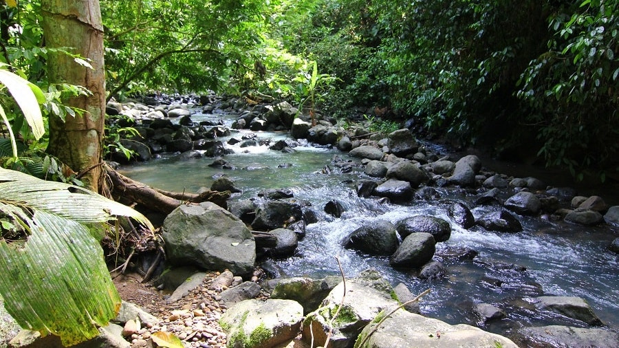 Rainforest Volunteer Project in Costa Rica