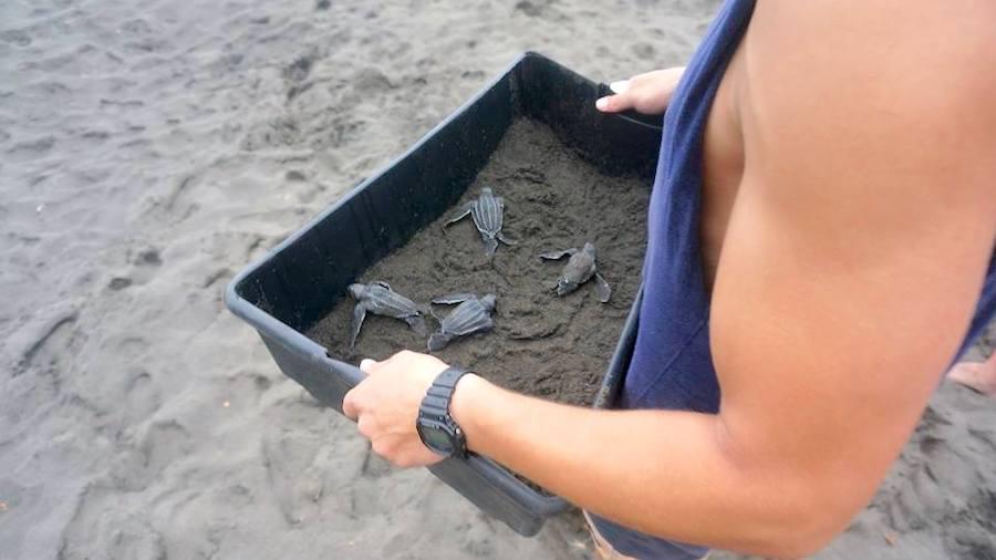Volunteer in Costa Rica rescuing endangered sea turtles