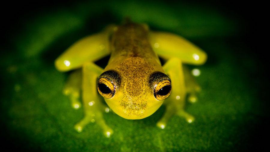 Costa Rica Volunteer in the Rainforest_Frog Photo