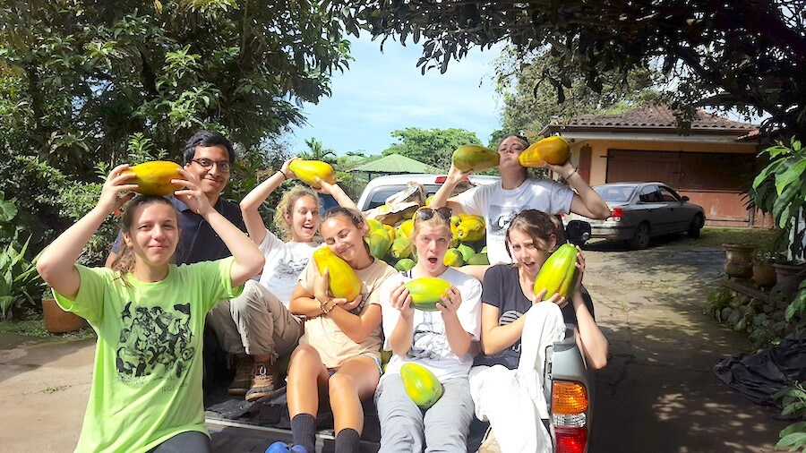 Student volunteers reap their papaya harvest while volunteering with animals in Costa Rica